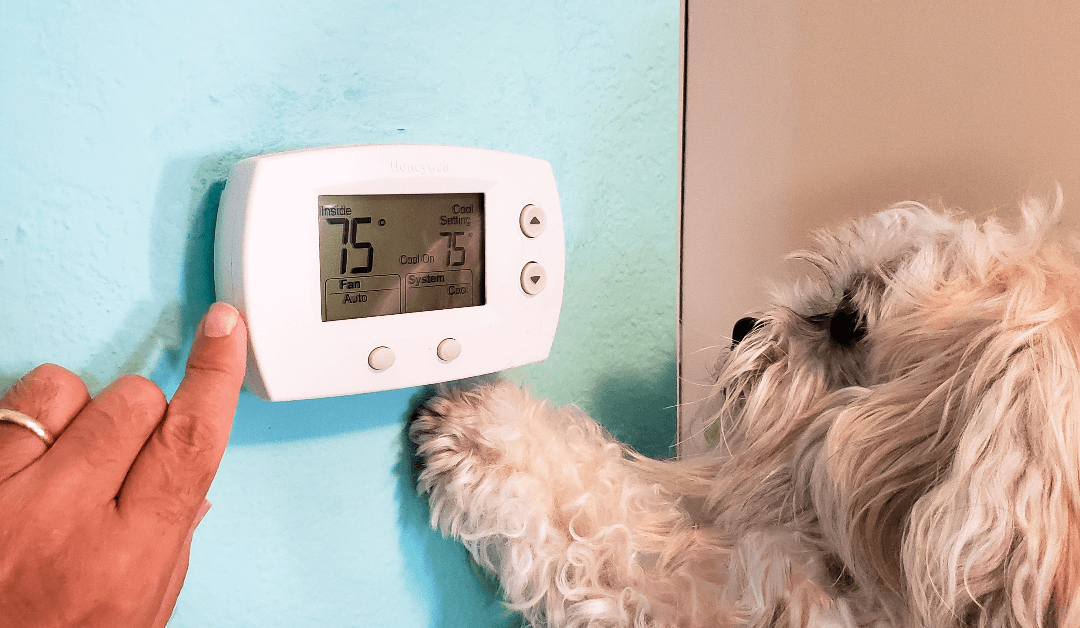 6 Practical HVAC Maintenance Tips for Pet Owners